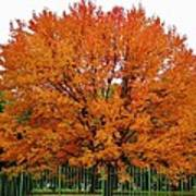 Big Tree In Autumn Poster