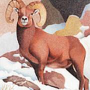 Bighorn Sheep Winter Poster