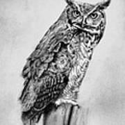 Bill's Great Horned Owl Poster
