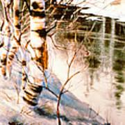 Birch By Stream Poster