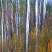 Birch Fall Abstract Poster