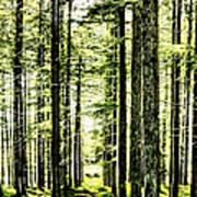 Birch Forest Fractal Poster