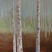 Birch In The Mist Poster