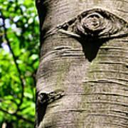 Birch Man Poster