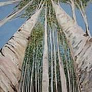 Birch Tree 2 Poster
