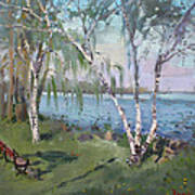 Birch Trees By The River Poster