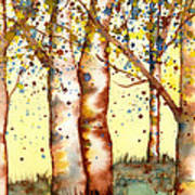 Birch Trees Poster by Diane Ferron