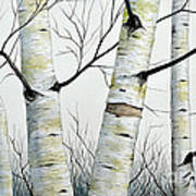 Birch Trees In The Forest By Christopher Shellhammer Poster