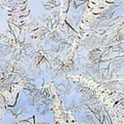 Birch Trees Poster by Leo Gehrtz