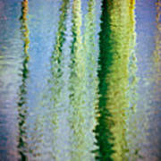 Birches Reflections II Poster