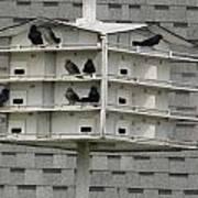 Bird Apartment House Poster
