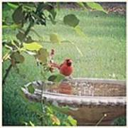 Bird Bath Poster