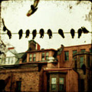 Bird Cityscape Poster