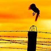 Bird Flying Off From Prison Fence Poster