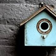 Bird House Of Blue By Diana Sainz Poster