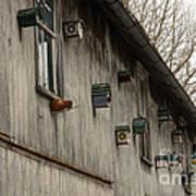 Bird Houses Poster