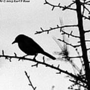 Bird In B And W Poster