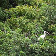 Bird In Bush Poster