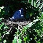 Bird In Nest Poster
