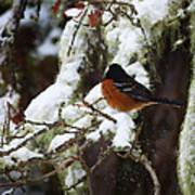 Bird In Snow Poster