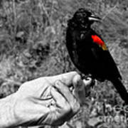 Bird In The Hand.seattle.bw Poster