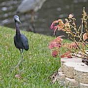 Bird In Yard Poster