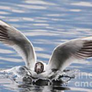 Bird Landing Poster