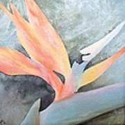 Bird Of Paradise 2 Poster