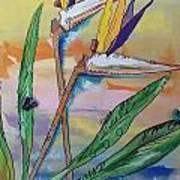 Bird Of Paradise Poster by Karen Carnow