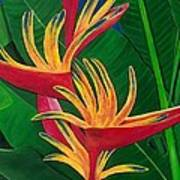 Bird Of Paradise Painting Poster