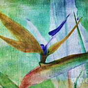 Bird Of Paradise Watercolor Poster