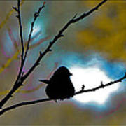 Bird On A Twig Poster