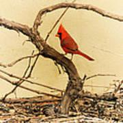 Bird On A Vine Poster