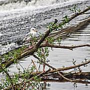 Bird On A Weir Poster