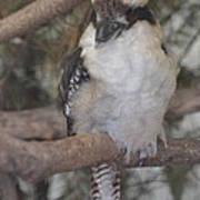 Bird On Branch II Poster