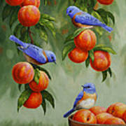 Bird Painting - Bluebirds And Peaches Poster