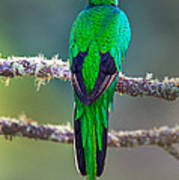 Bird Perching On A Branch, Savegre Poster