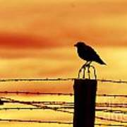 Bird Sitting On Prison Fence Poster