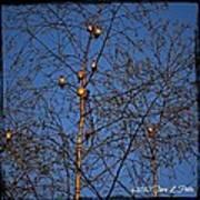 Bird Tree Poster