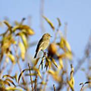 Bird Watcher Poster