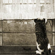 Bird Watching Kitty Cat Bw Poster by Andee Design