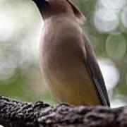 Bird With Bokeh Poster