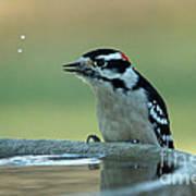 Birdbath Funtime Poster