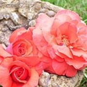 Birdbath Roses Poster