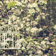 Birdcage In Blossom Poster
