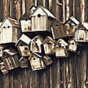Birdhouse Condominium Poster