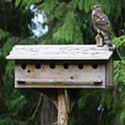 Birdhouse Takeover  Poster