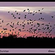 Birds At Sunrise Poster Poster