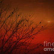 Birds At Sunset Poster