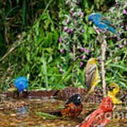 Birds Bathing Poster